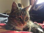 Minerva hiding in bed
